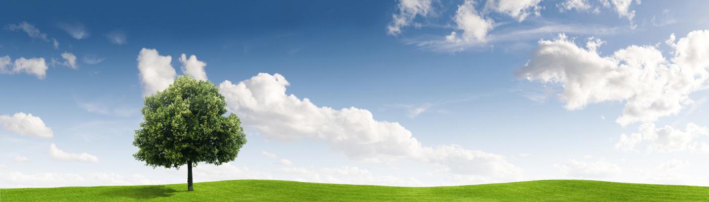 Ottimizzazione Immagini SEO: la guida completa